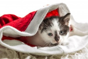 Kitten Stocking